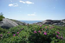 ケベックの花の画像002