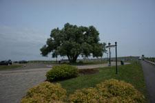 ケベックの木の画像001