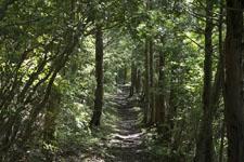 西赤石山の森の画像001