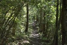 西赤石山の森の画像002