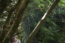 西赤石山の森の画像003