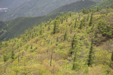 西赤石山の山の画像006