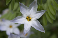 早明浦の花の画像002