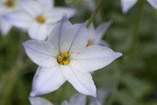 早明浦の花の画像003