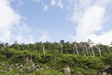 御嶽山の森