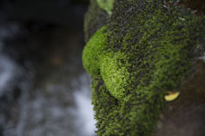 床鍋谷の苔の画像001