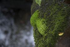 床鍋谷の苔の画像002