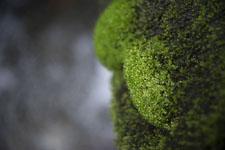 床鍋谷の苔の画像003
