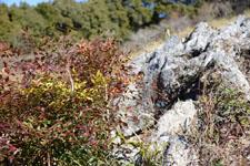 佐川の樹木の岩