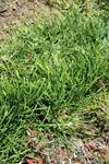 佐川の草の画像003