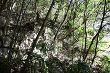 佐川の林の木