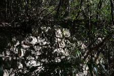 佐川の林の岩の画像001