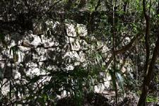 佐川の林の岩の画像002