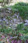 佐川の草の岩の画像001