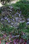佐川の草の岩の画像002