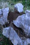 佐川の草の岩の画像003