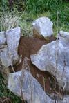 佐川の草の岩の画像004