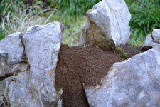 佐川の草の岩の画像005