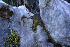 佐川の草の岩の画像006