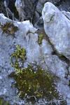 佐川の草の岩の画像008