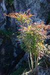 佐川の木の岩の画像001