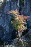 佐川の木の岩の画像002