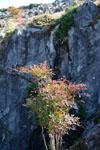 佐川の木の岩の画像003