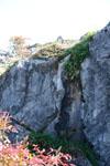 佐川の木の岩の画像004
