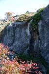 佐川の木の岩の画像005
