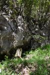 佐川の木の岩の画像007