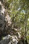 佐川の木の岩の画像008