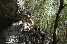 佐川の木の岩の画像010