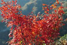 小豆島の紅葉の画像002