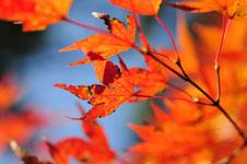 小豆島の紅葉の画像004