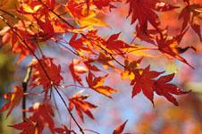 小豆島の紅葉の画像005