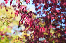 小豆島の紅葉の画像006