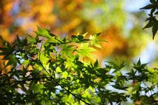 小豆島の紅葉の画像007