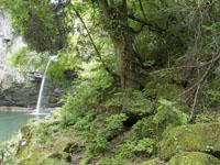 滝の画像032