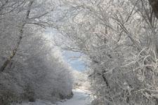 梶ヶ森の雪の画像004