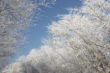 梶ヶ森の雪の画像005