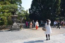 鎌倉の鶴岡八幡宮の画像006