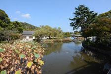 鎌倉の鶴岡八幡宮の画像017