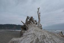 ラ・プッシュの海岸と流木の画像002