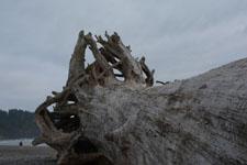 ラ・プッシュの海岸と流木の画像003