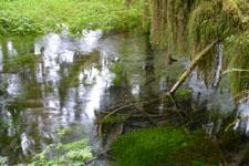 オリンピック国立公園の苔生す木の画像013