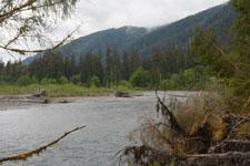 オリンピック国立公園の苔生す木の画像054