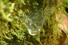 蜘蛛の巣にたまった朝露の画像003