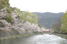 平安神宮のお堀の桜と屋形船の画像002