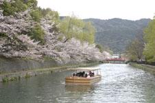 平安神宮のお堀の桜と屋形船の画像003