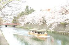 平安神宮のお堀の桜と屋形船の画像010